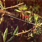 Jungle RopeWalker